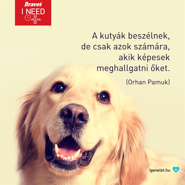A kutyák beszélnek...