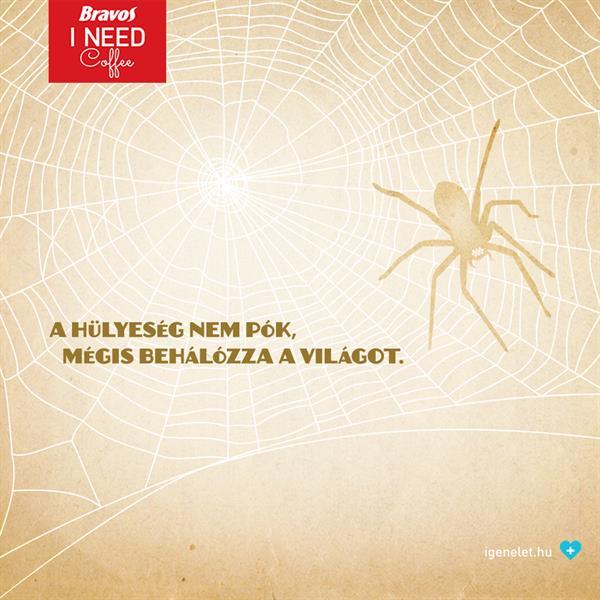 A pók és a hülyeség esete