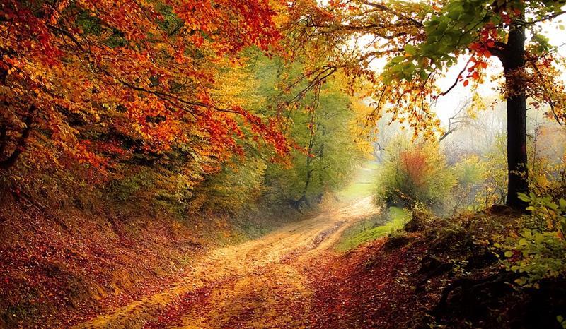 Aki úgy írt az őszről, ahogy senki más: Márai Sándor