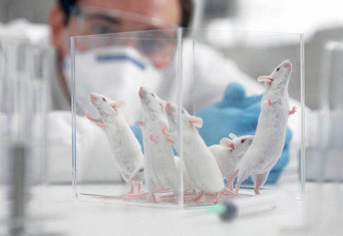 Állatkísérletek - tudomány és/vagy etika?