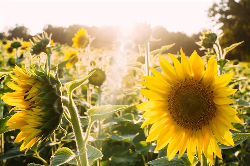 Az este verse - Ágh István: Virágosat álmodtam