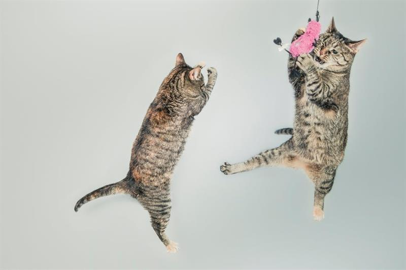 Az este verse - Charles Baudelaire: A macskák