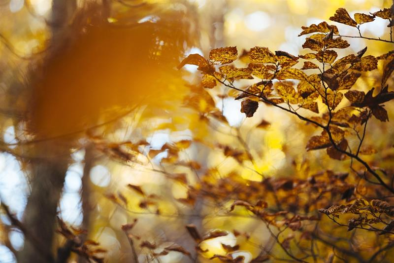 Az este verse - Kosztolányi Dezső: Októberi táj