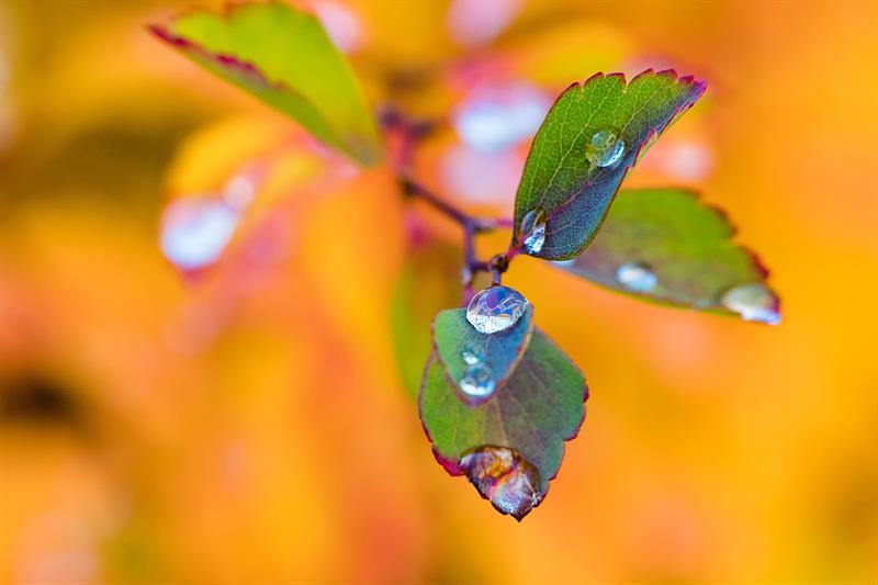 Az este verse - Marschalkó Lia: Őszi eső