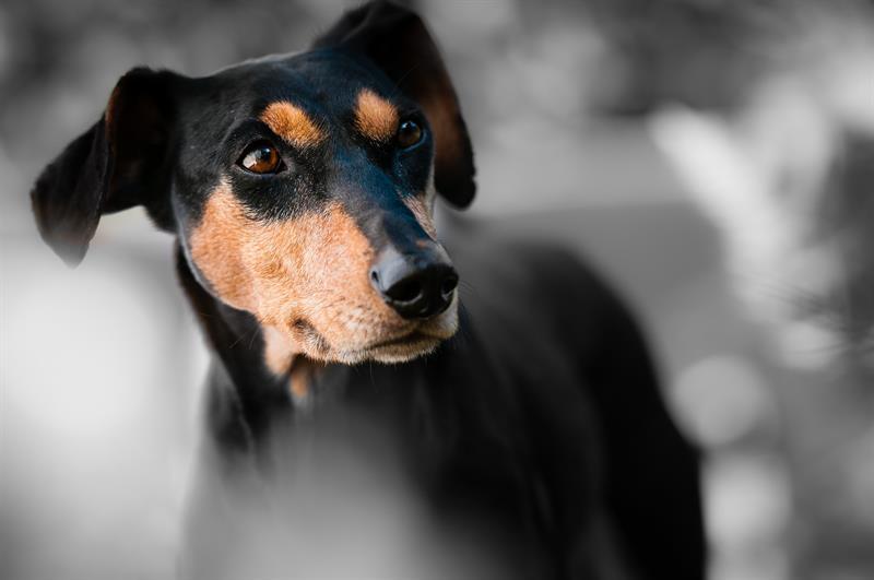 Hallgass a kutyádra - jelez, ha baj van!