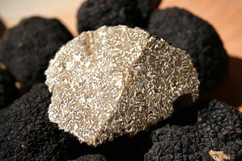 Szarvasgomba: állati jó fűszer, mely aranyat ér