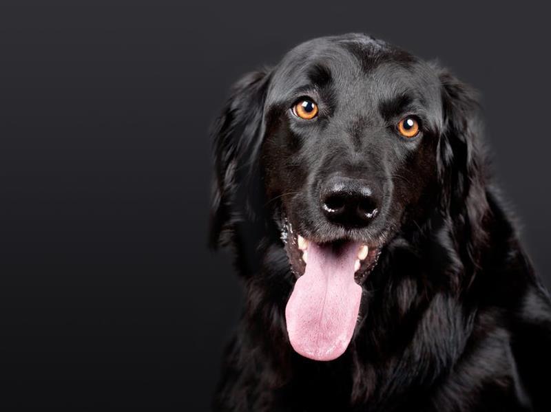 Világgá rohanó kutyák - mit tegyünk, hogy megvédjük kedvenceinket? - Felidéző