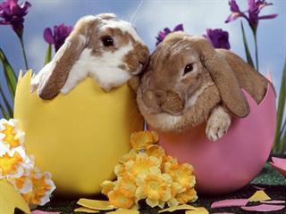 A húsvéti nyuszi nyílt levele minden gyereknek és szüleiknek