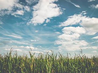 Az este verse -  Vernon Duckworth-Barker: Egy felhőhöz