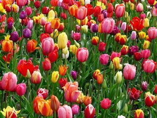 Az este verse - Ady Endre: Költők tavaszkor énekelnek
