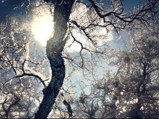 Az este verse - Áprily Lajos: Téli tanács magamnak