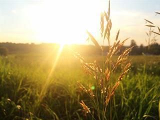 Az este verse - Csoóri Sándor: Búcsúvers