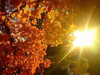 Az este verse - Devecseri Gábor: Belerohan a nyár az őszbe!