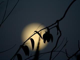 Az este verse - Faludy György: Hold, erdő, vízesés