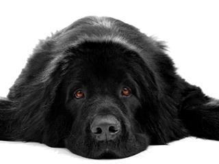Az este verse - George Noel Gordon Byron: Felirat egy újfounlandi kutya síremlékére