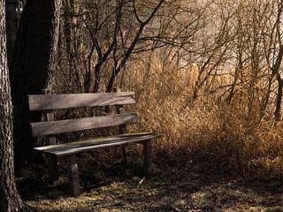 Az este verse - Gergely Ágnes: Szeretek várni rád