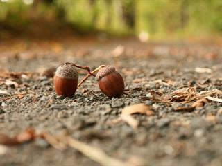 Az este verse - Illyés Gyula: Jön az ősz