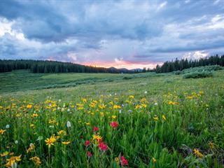Az este verse - József Attila: Várlak