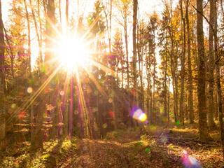 Az este verse - Kányádi Sándor: Valaki jár a fák hegyén
