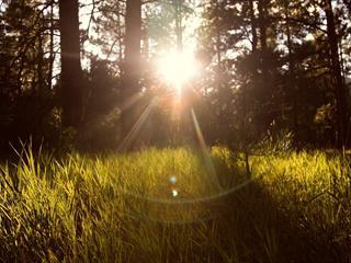 Az este verse - Nemes Nagy Ágnes: Tanácsok, tavasszal