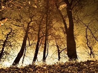 Az este verse - Szabó Lőrinc: Őszi meggyfa