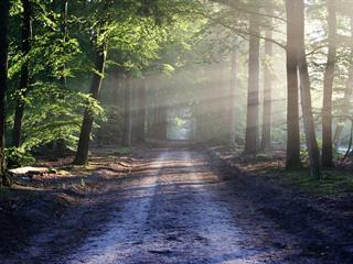 Az este verse - Szepes Mária: Csendesebb utakon...