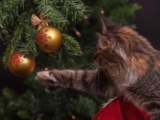 Ilyen a karácsony, ha macskád van