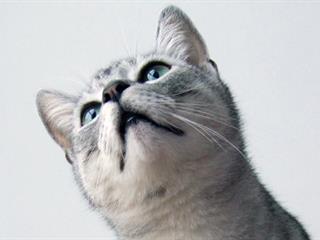 Kávé helyett indítsd macskával a napot!