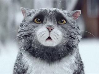 Kis macska, nagy zűrzavar - Ennél cukibb karácsonyi videót nem fogsz látni