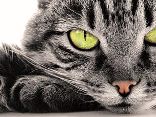Napi vacak - A cicáink valóban potenciális gyilkosaink?
