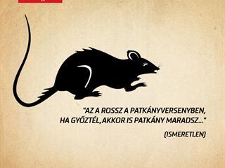 Patkányverseny