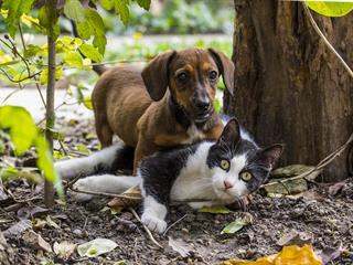 Tacskalandok: Günther, a macskák réme