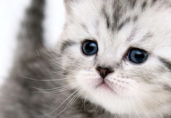 fahéjas karcsúsító videók macskák számára